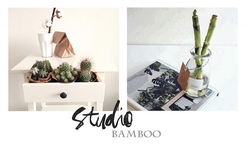 бамбук новополоцк